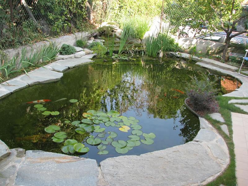 L 39 importanza delle piante acquatiche nei laghi per koi for Vasca pesci giardino