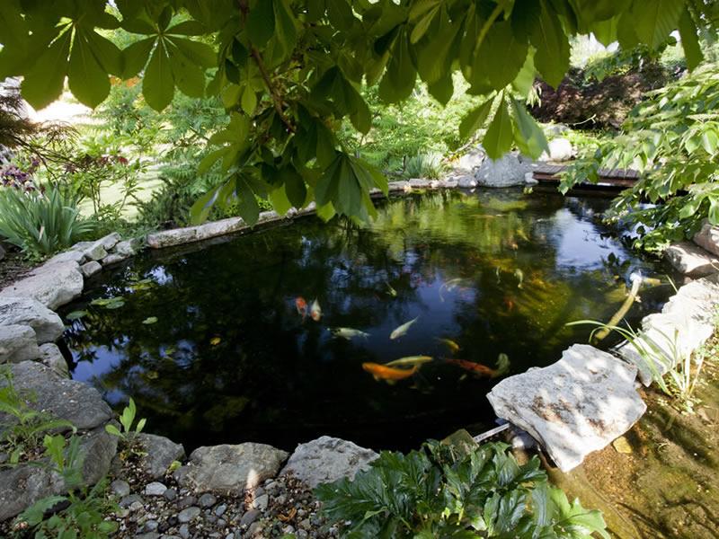 Vasca Da Esterno Pesci : I pesci ideali per un laghetto da giardino piante fiori e animali