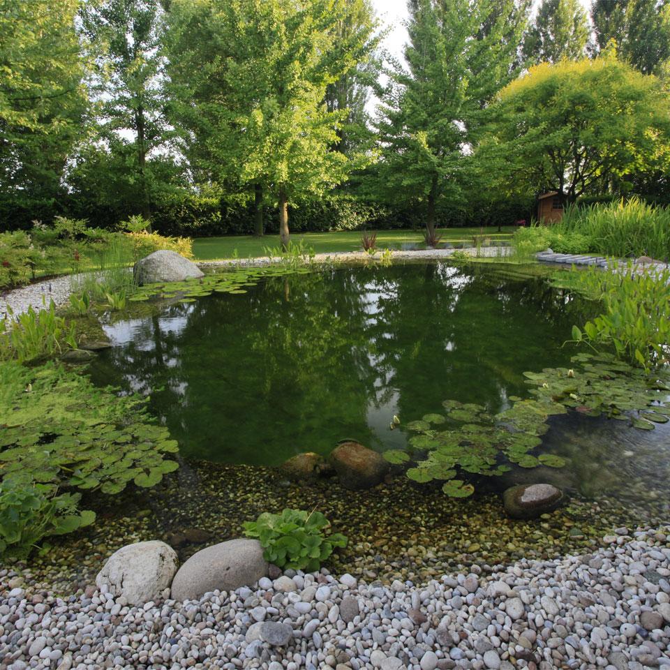 Articoli biopiscine ecolaghi e piscine naturali for Laghetto naturale
