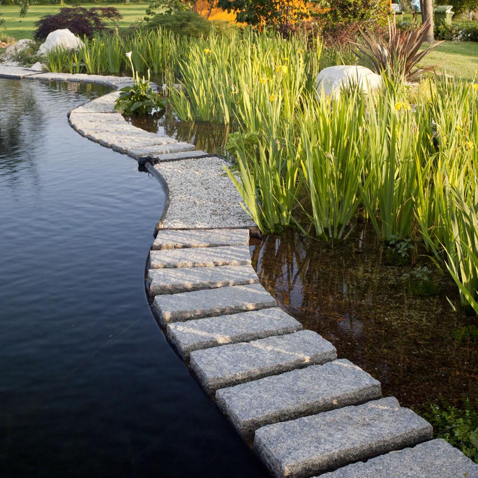 Fitodepurazione l utilizzo di piante acquatiche come for Piscine laghetto per pesci