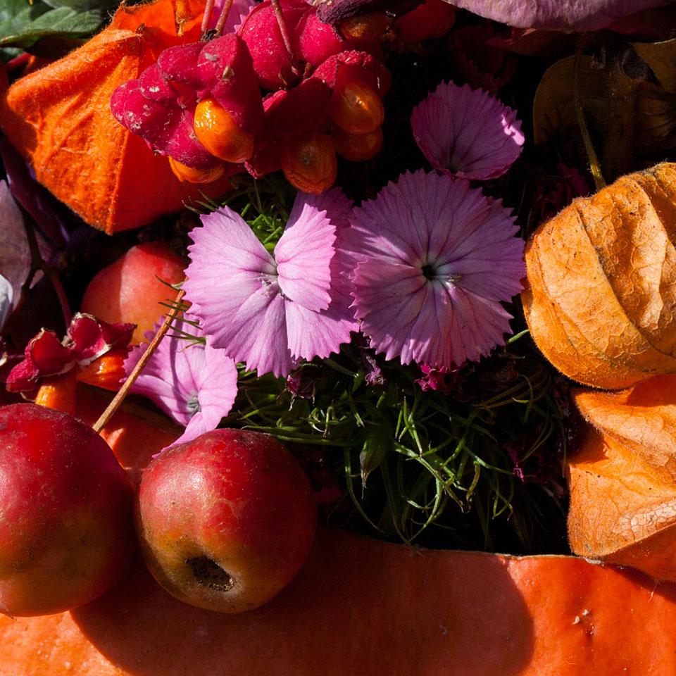 Le fioriture autunnali la magia dell 39 autunno al bordo di for Immagini fiori autunnali