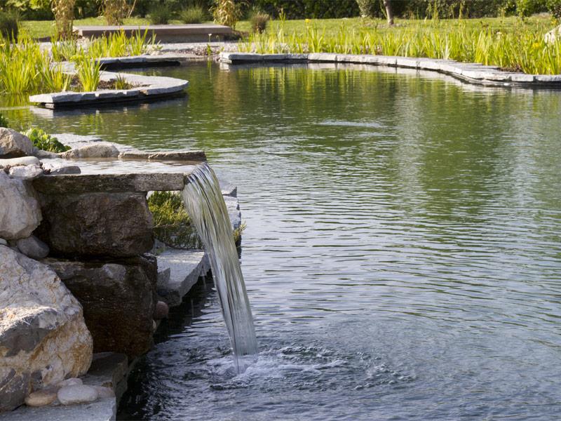 La pulizia di biolaghetti e piscine naturali biolaghi for Pesci finti per piscina