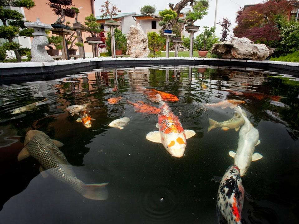 Come realizzare un lago per le carpe koi piante fiori e for Piscine per pesci