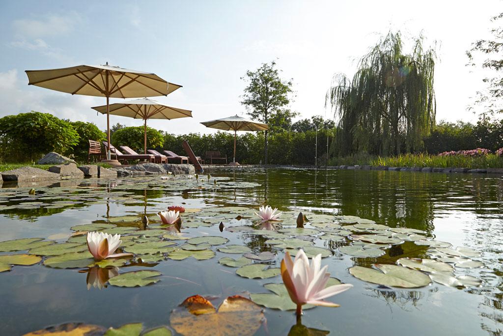 Piscina ecologica piscina ecologica nella regione for Biopiscinas paso a paso