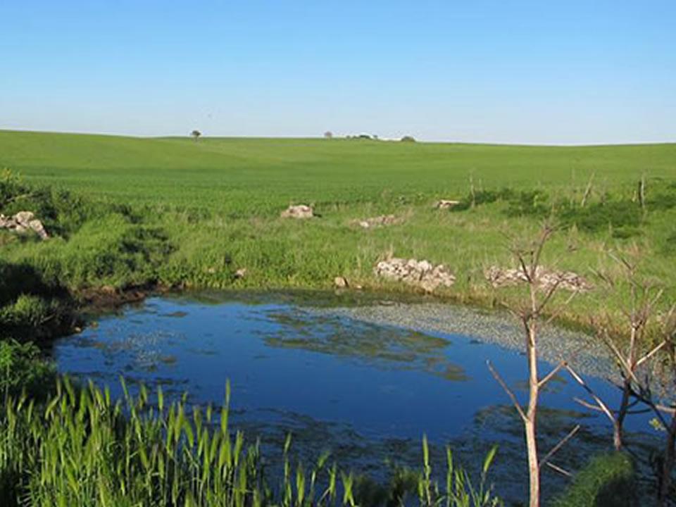 Immagini stagno anatre nello stagno immagine stock for Ecosistema dello stagno