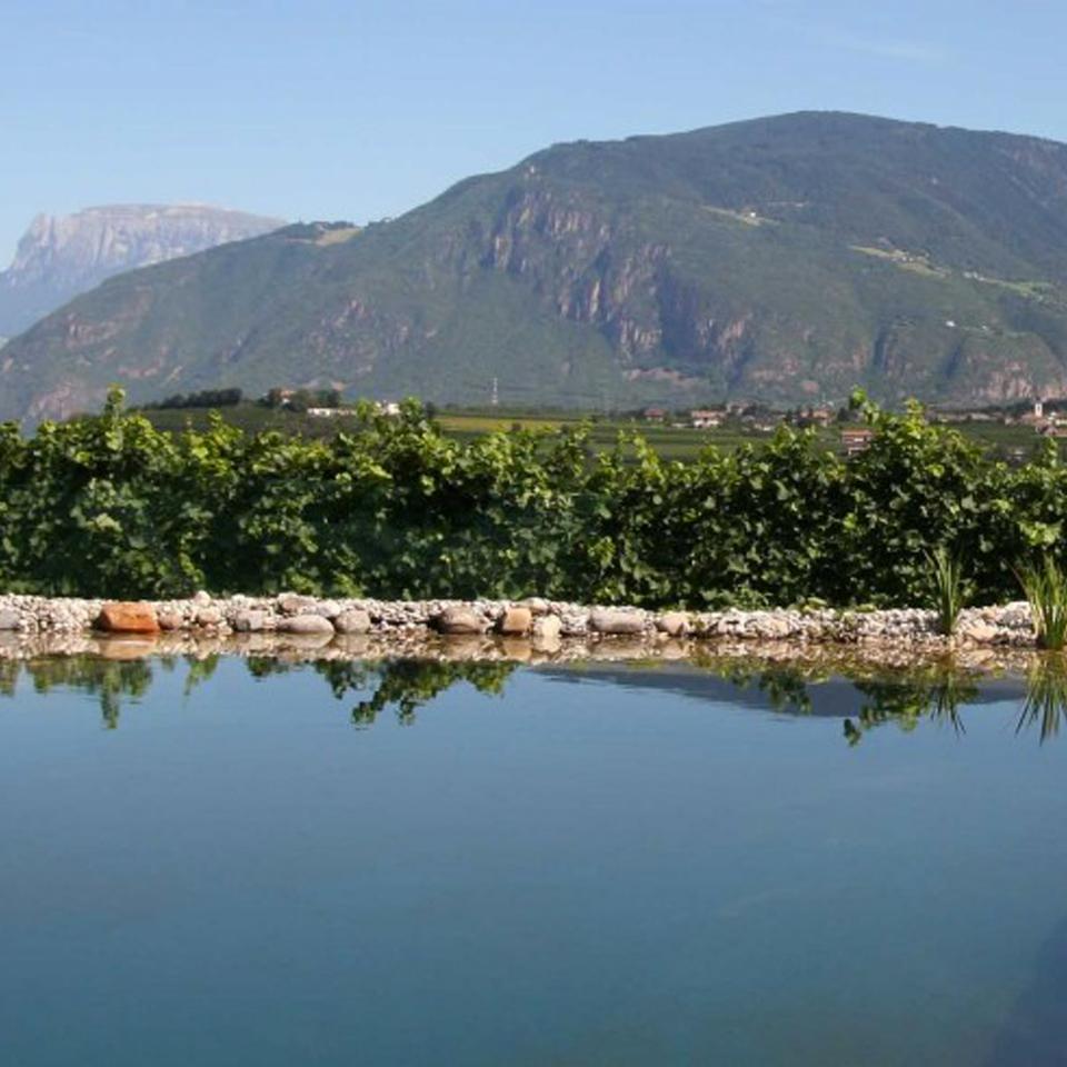 Biolaghi acqua e giardino biopiscine ecolaghi e for Alghe filamentose nel laghetto
